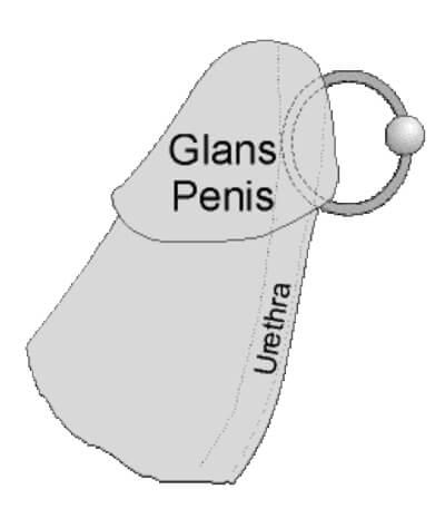 Пиърсинг на пениса | Пиърсинг на кура | Пиърсинг мъжки член | Принц Албърт | Обеца на пениса | Секс с пиърсинг